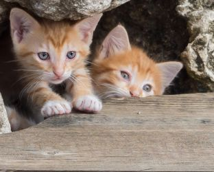 GingerKittens by mzkate