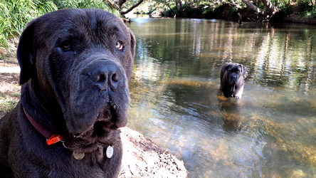 River Dogs by FNQ