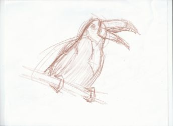 Toucan by Euv