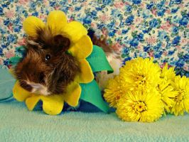 Tiberius the Yellow Flower by ThePiggieWheek