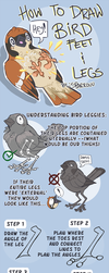 How to Draw Bird Feet and Legs by SPARROUU