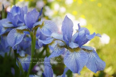 Spring Flowers by Creativeminddesign