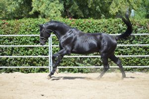 DWP FREE HORSE STOCK 143 by DancesWithPonies