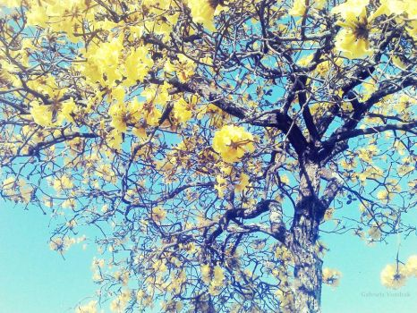 Yellow the tree by oblivium-xx