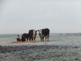 Who are Moo? by LauraHolArt
