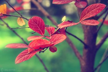 Autumn Leaves by pacificdreams