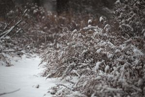 Winter Has Arrived by BlackRoomPhoto