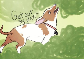 Jasper the Doge by Puccoon