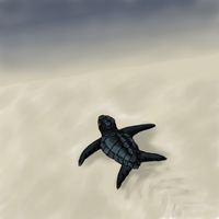 Turtle by AscendedArts