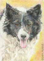 Jess - ACEO by Carol-Moore