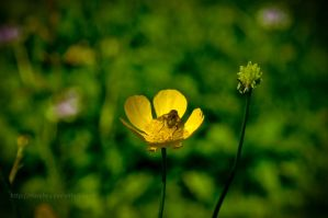 Fly and flower by marphey