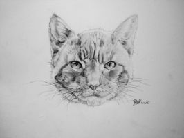 The Stray - Cat head pencil drawing by AnArtEnthusiast