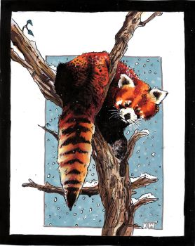 red panda by EatToast