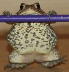Toad Stock 2 of 11 by Lovely-DreamCatcher