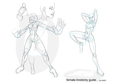 Female anatomy by OrenK