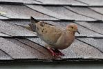 Bird on the Roof by boogster11