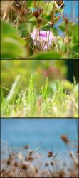 DOF Test by diegoreales