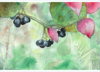 Black chokeberry by Kettana