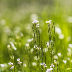 Meadow in May by atomkat