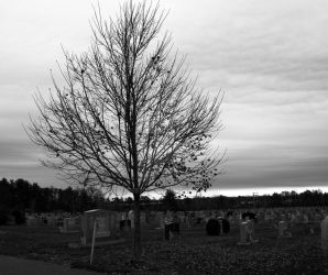 Cemetery Tree by Sue1979