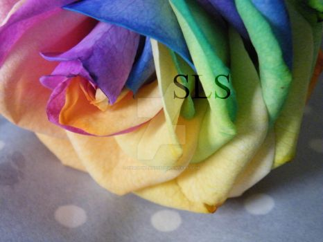 Rainbow rose by Shadowland13