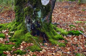 Freebie - Tree Trunk Forest Autumn STOCK by AStoKo