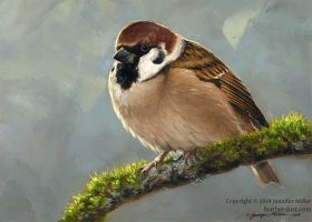 Eurasian Tree Sparrow by Nambroth