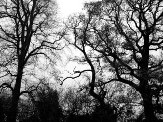 Trees in Winter by Katherine-Whiffin