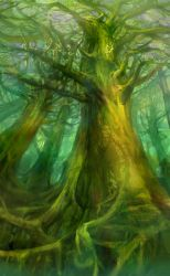 ancient forest by yunhyunjung