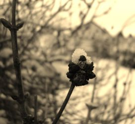 Catch The Final Snow by Enigmatic-Infelicity