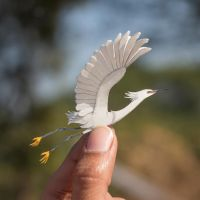 Snowy Egret - Paper cut birds by NVillustration