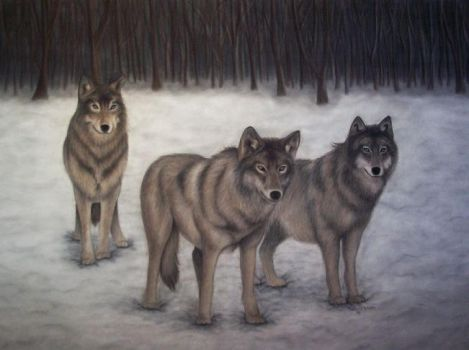 Three Wolves by tamie24