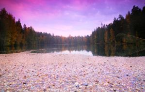Autumn leaves floating in pond by KariLiimatainen
