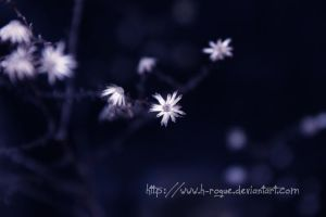 White Flowers 2 by Hopeful-Rogue