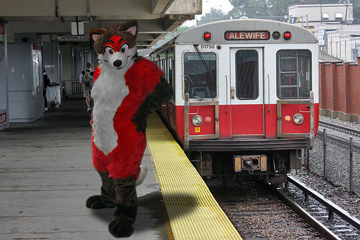 A red fox on the red line by PudgeyRedFox