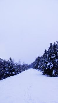 winter path trees stock by conceptually