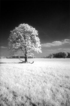 infrared by Tomek-AT