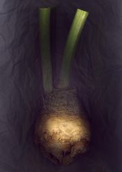 Celery Root No.1 by kparks