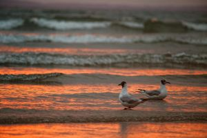 Seagulls rest by LatchDrom
