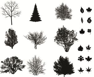 leaves  trees  Brushes by 2299299