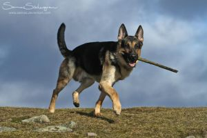 Gramse and the stick by SaNNaS