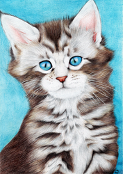 Maine Coon by xClarXCheex