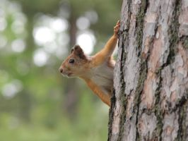 Squirrel Lookout by njt-rasta