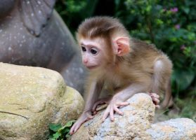 mini monkey by Janueh