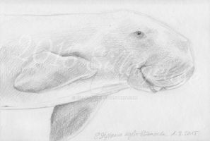 Dugong dugon by Sillageuse