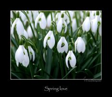 Spring love by Tricia-Danby