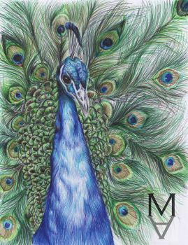 Peacock drawn with colour biro pens by sarah-mca-art