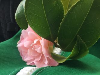 Camellia on Bus (7) by Clare-Prime-of-Ultra
