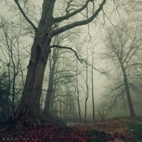 Foggy Tunes by Oer-Wout
