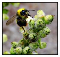 : Gimme Pollen : by TW1STEDP1X